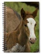 The Curious Colt  Spiral Notebook