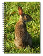The Curious Rabbit Spiral Notebook