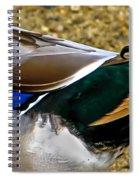 The Curl Spiral Notebook
