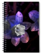 The Daffodil Trio Spiral Notebook