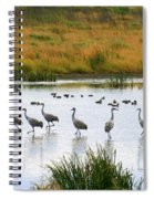 The Dance Of The Sandhill Cranes Spiral Notebook