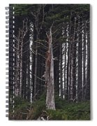The Deep Dark Sharp Forest Spiral Notebook