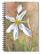 The Delicate Autumn Lady - Narcissus Serotinus Spiral Notebook