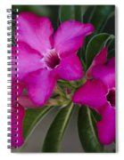 The Desert Rose  Spiral Notebook