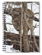 The Doe And The Snow - Odocoileus Virginianus Spiral Notebook