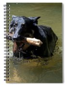 The Dog Days Of Summer Spiral Notebook