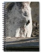 The Drinking Fountain Spiral Notebook