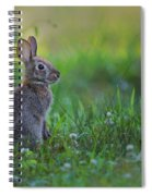The Eastern Cottontail Spiral Notebook