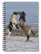 The Encounter Spiral Notebook