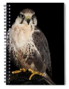 The Falcon Spiral Notebook