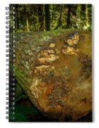 The Fallen Collection 6 Spiral Notebook