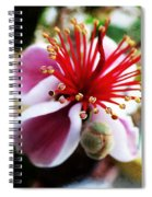the Feijoa Blossom Spiral Notebook