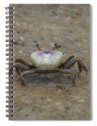 The Fiddler Crab On Hilton Head Island Spiral Notebook