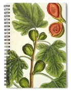 The Fig Tree Spiral Notebook
