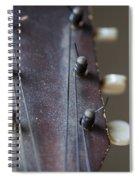 The First Spiral Notebook