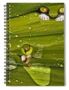 The First Rain Spiral Notebook
