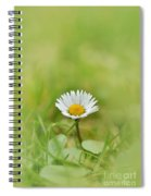 The First White Daisy Spiral Notebook