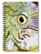 The Fish Spiral Notebook