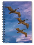 The Flight Of The Pelican Spiral Notebook