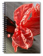 The Flower And The Butterfly Spiral Notebook