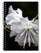 The Flower Spiral Notebook