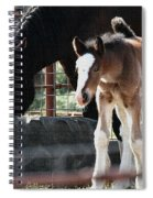 The Flying Colt With The Big White Feet Spiral Notebook
