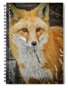 The Fox 8 Spiral Notebook