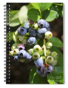 The Freshest Blueberries Spiral Notebook