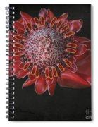 The Garden Of Light Spiral Notebook