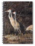 The Gathering...sandhill Cranes Spiral Notebook