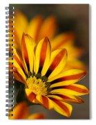 The Gazanias Spiral Notebook