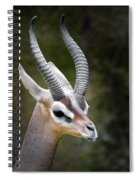 The Gerenuk Spiral Notebook