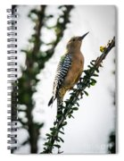 The Gila  Woodpecker Spiral Notebook