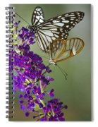 The Glasswing And A Friend  Spiral Notebook
