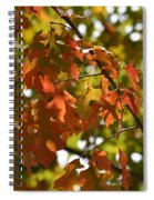 The Glory Of Autumn Spiral Notebook