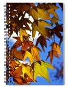 The Golden Hues Of Autumn  Spiral Notebook