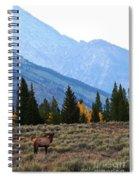 The Grand Scheme Spiral Notebook