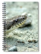 The Gray Eastern Rat Snake Right Side Head Shot Spiral Notebook