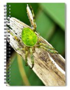 The Green Spider Spiral Notebook