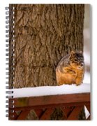 The Grey Squirrel George In Winter Spiral Notebook