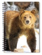 The Grizzly Strut Spiral Notebook