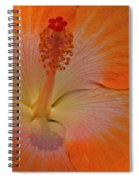 The Heart Of A Hibiscus Spiral Notebook