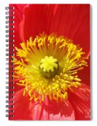 The Heart Of A Red Poppy Spiral Notebook