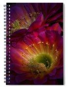 The Hidden Treasures  Spiral Notebook