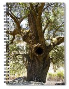 The Hole Tree Santa Margarita Lake Spiral Notebook