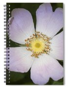The Humble Dog Rose Spiral Notebook