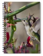 The Hummingbird And The Slipper Plant  Spiral Notebook