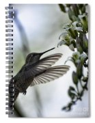 The Hummingbird  Spiral Notebook
