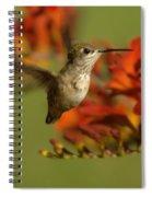 The Hummingbird Turns   Spiral Notebook