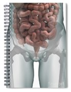 The Intestines Spiral Notebook